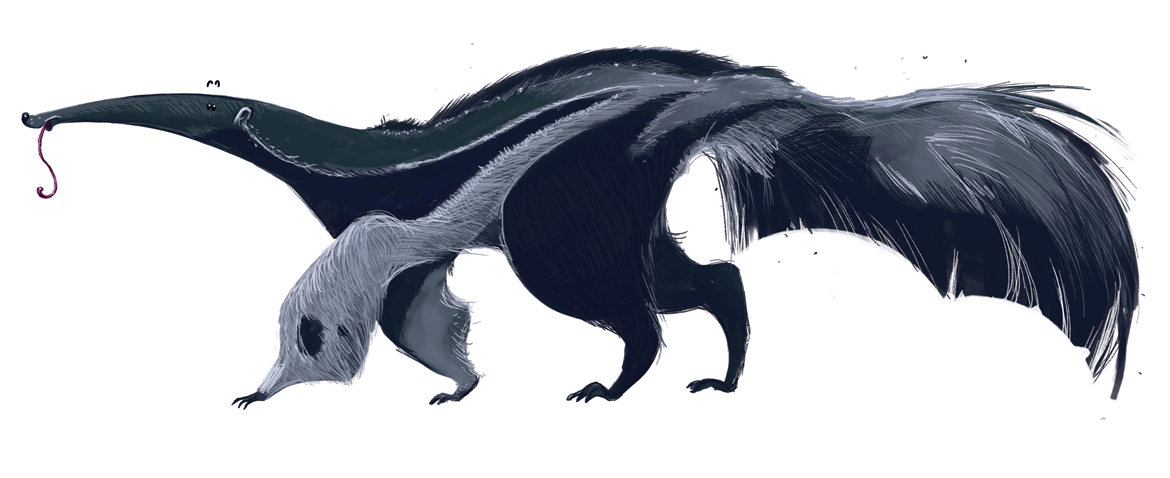 Rowena Aitken Illustration | Animals | Anteater