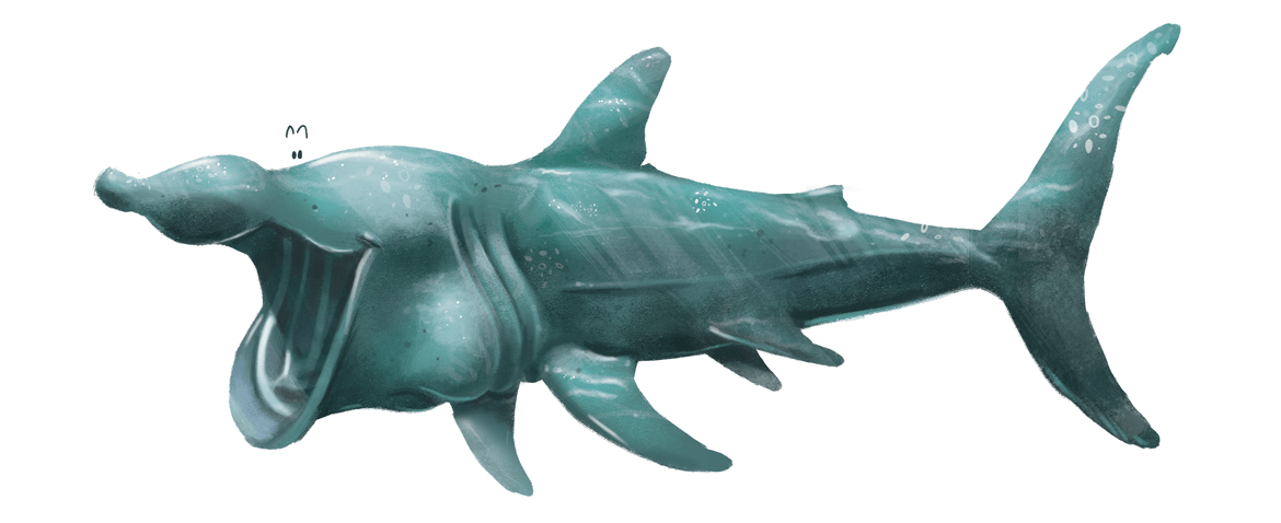 Rowena Aitken Illustration | Animals | Basking Shark